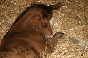 A healthy foal is not a fluke.  It is a well thought out, and fed animal.  With prime Vet care.