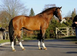 Stud Fee's for a horse like this can be upwards of 2500.00.