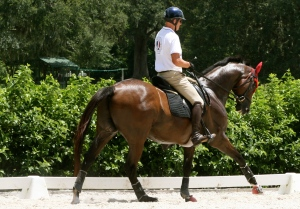 Yes, yes that is my horse, and yes, that is an Olympian riding him, and yes, he looks amazing.  And we are blessed.